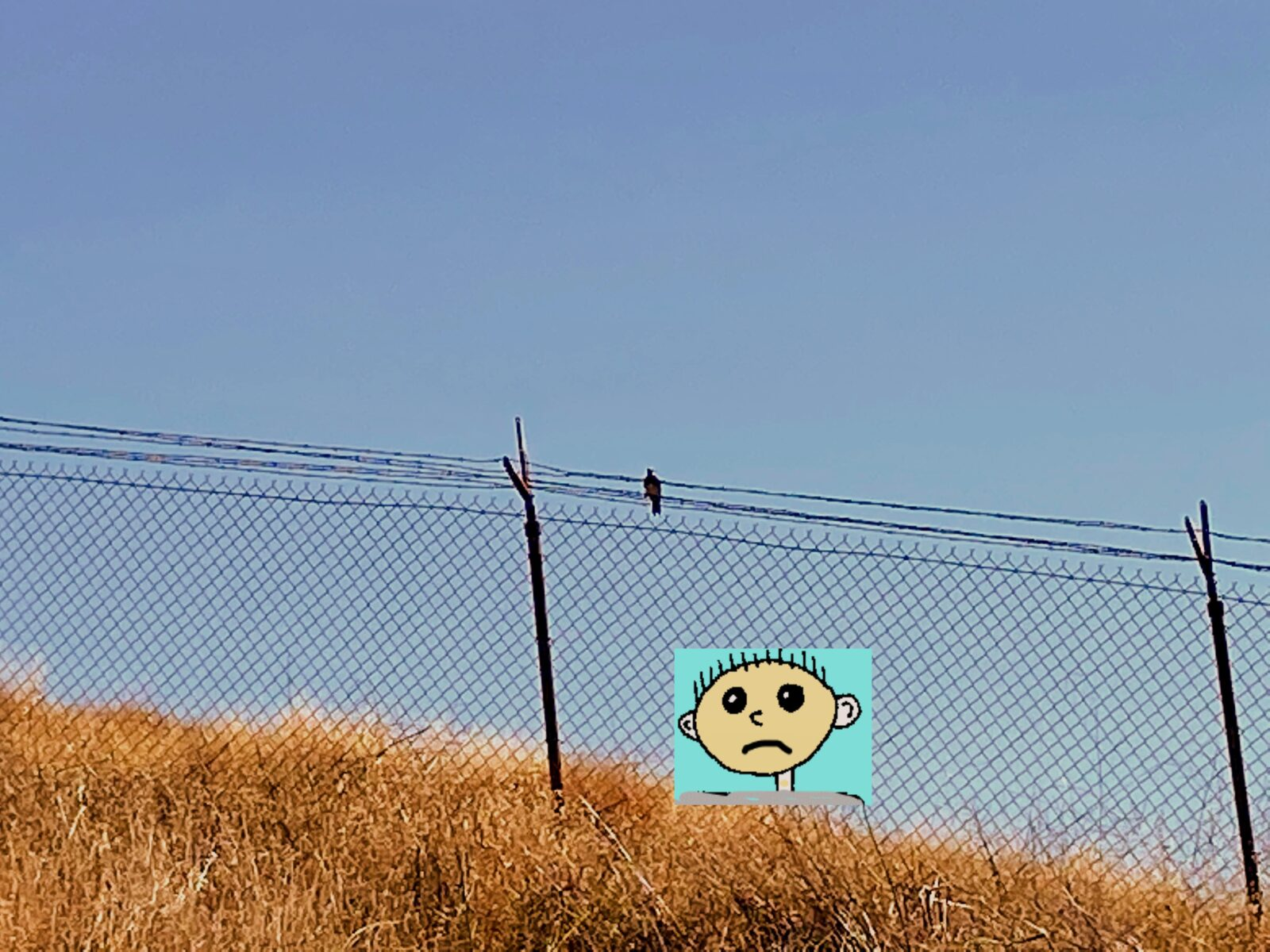 Hash Boy in fence